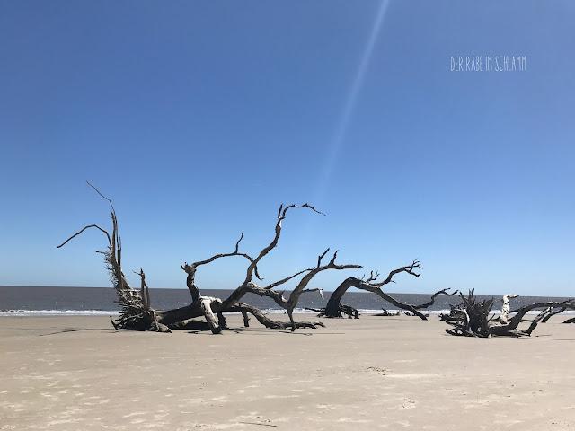 Der Rabe im Schlamm, Driftwood Beach