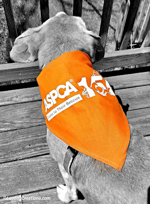 Help Sophie Wish the ASPCA a Happy 150th - and enter to WIN a #ASPCA150 Gift Pack! #adoptdontshop #rescuedog #LapdogCreations ©LapdogCreations