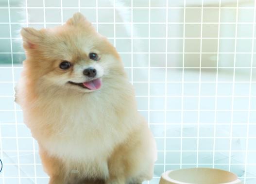 16++ Anjing mini pop terbaru