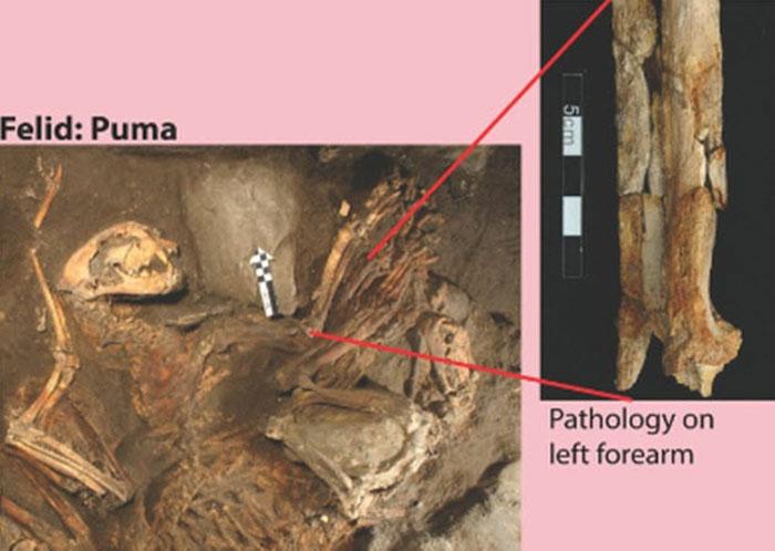 Fosil Hewan Pemakan Manusia