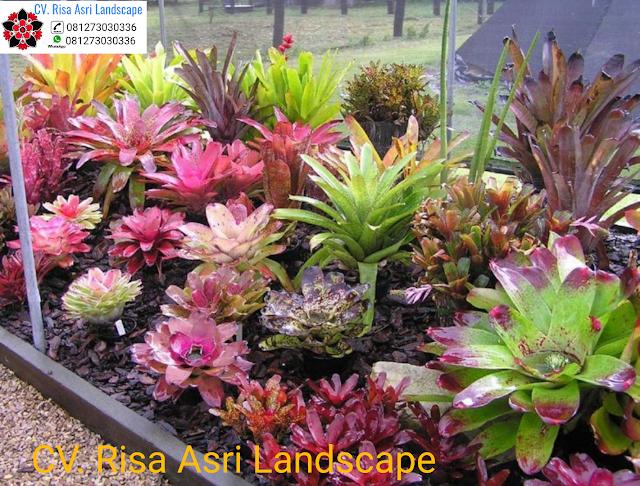 Tukang Taman di Sidoarjo - Kontraktor Landscape Murah Dengan Harga Terbaik
