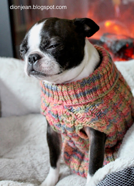 Sinead the Boston terrier in her sweater by the fire