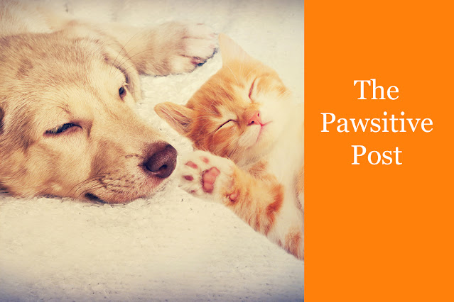 The Pawsitive Post banner shows a happy, sleeping dog and ginger kitten