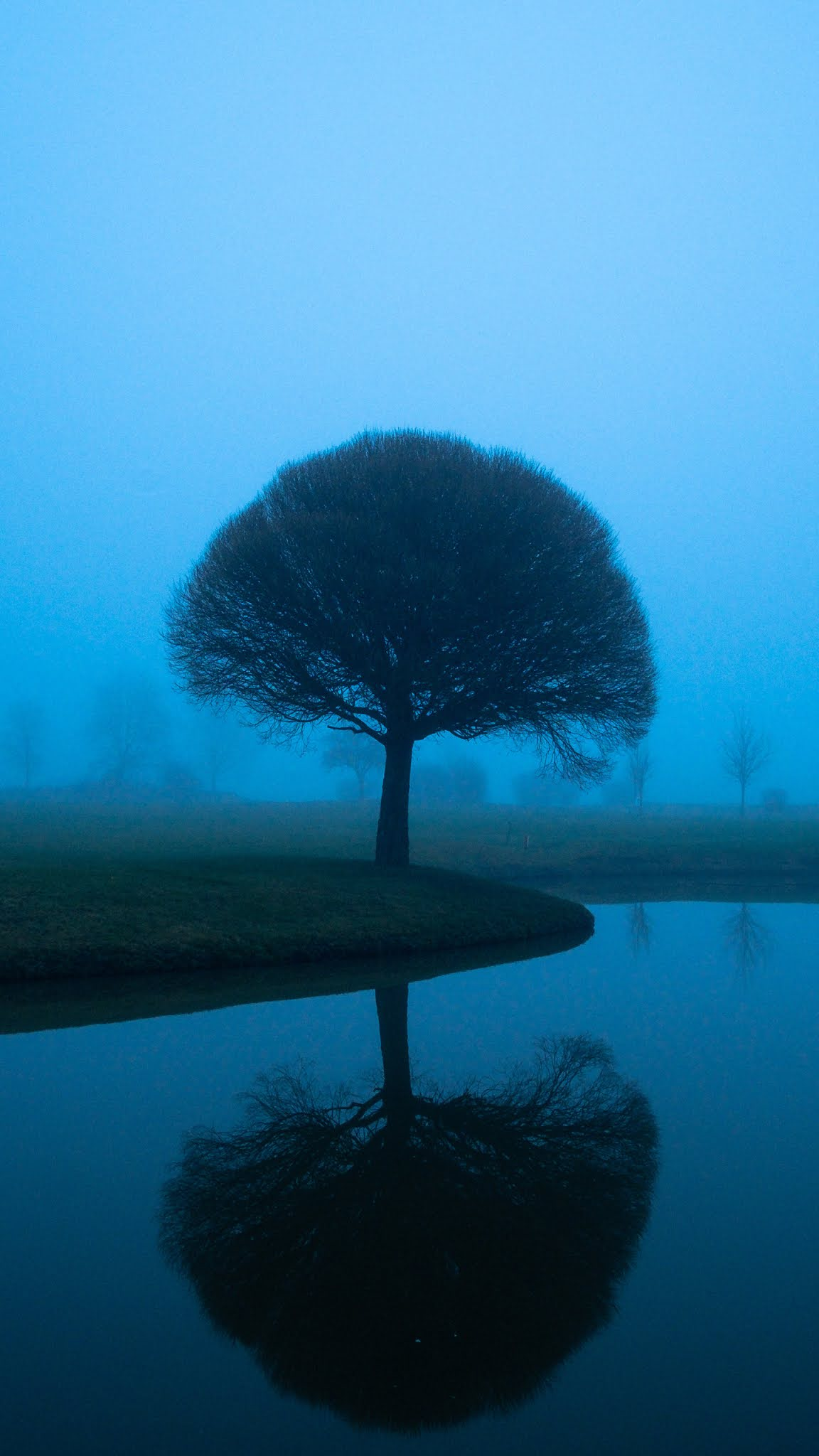 Tree Mistscape mobile wallpaper