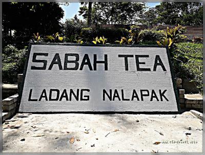 Sabah Tea Ranau