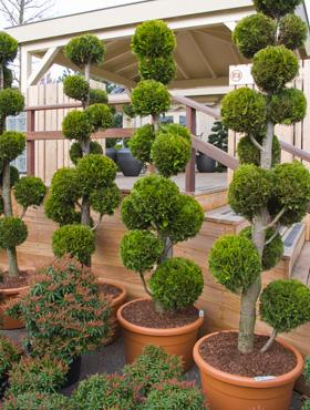 by vero plantes pour terrasses. Black Bedroom Furniture Sets. Home Design Ideas
