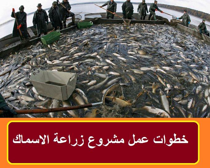 تربية أسماك الزينة للمبتدئين pdf