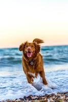 Dog the faithful
