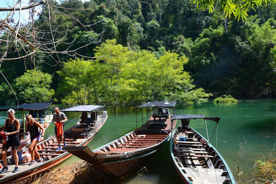 dżungla w Tajlandii