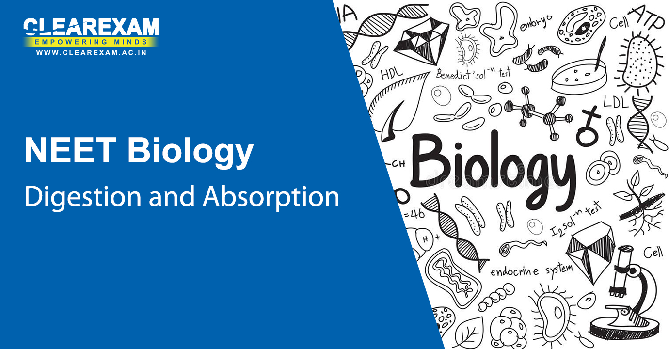 NEET Biology Digestion and Absorption