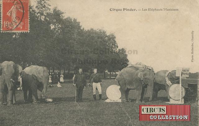 les éléphant du Cirque Pinder