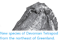 http://sciencythoughts.blogspot.com/2013/01/new-species-of-devonian-tetrapod-from.html