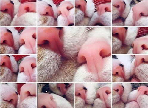 Funny Cat Noses Picture Collection