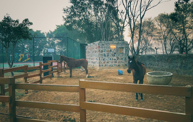 One can also enjoy horse riding at The Westin Resorts Sohna, although I am not sure how skilled staff they have to ensure that it's safe for guests who may not be expert at it. Just across this horse stable, there is a cricket ground where guests can enjoy the game. The Westin Resort in Sohna is popular for corporate events and for them Cricket ground makes sense. Otherwise it's hard to have such big family group, although I know families who have planned staycations in big groups as well.     Related Blogpost - Lalitha Mahal, Mysuru - A unique heritage hotel in India