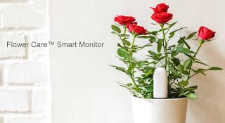 Mi Plant Flowers tester