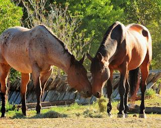 horse properties in prescott