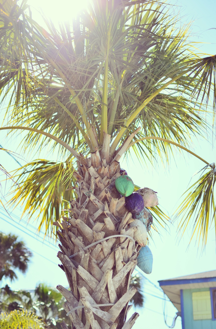 COLORFUL COCONUTS TYBEE ISLAND