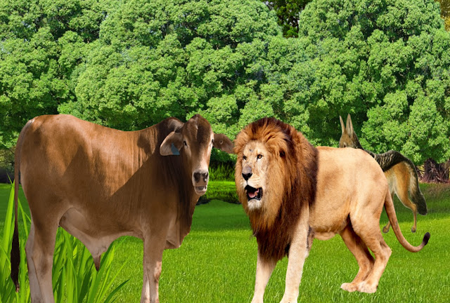 sher aur bail ki panchtantra kahani, lion and bull hindi story