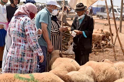 """""""أونسا"""" يوضح باللغة الأمازيغية طرق اقتناء الأضاحي"""