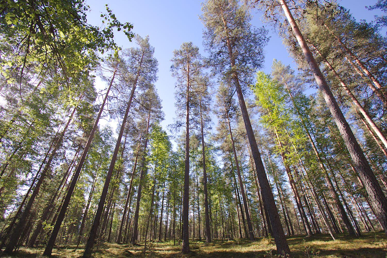 Hämeenkangas, Kankaanpää