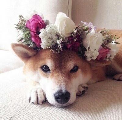 Dogs-weddings-ideas-KMich-Weddings-Events-Philadelphia