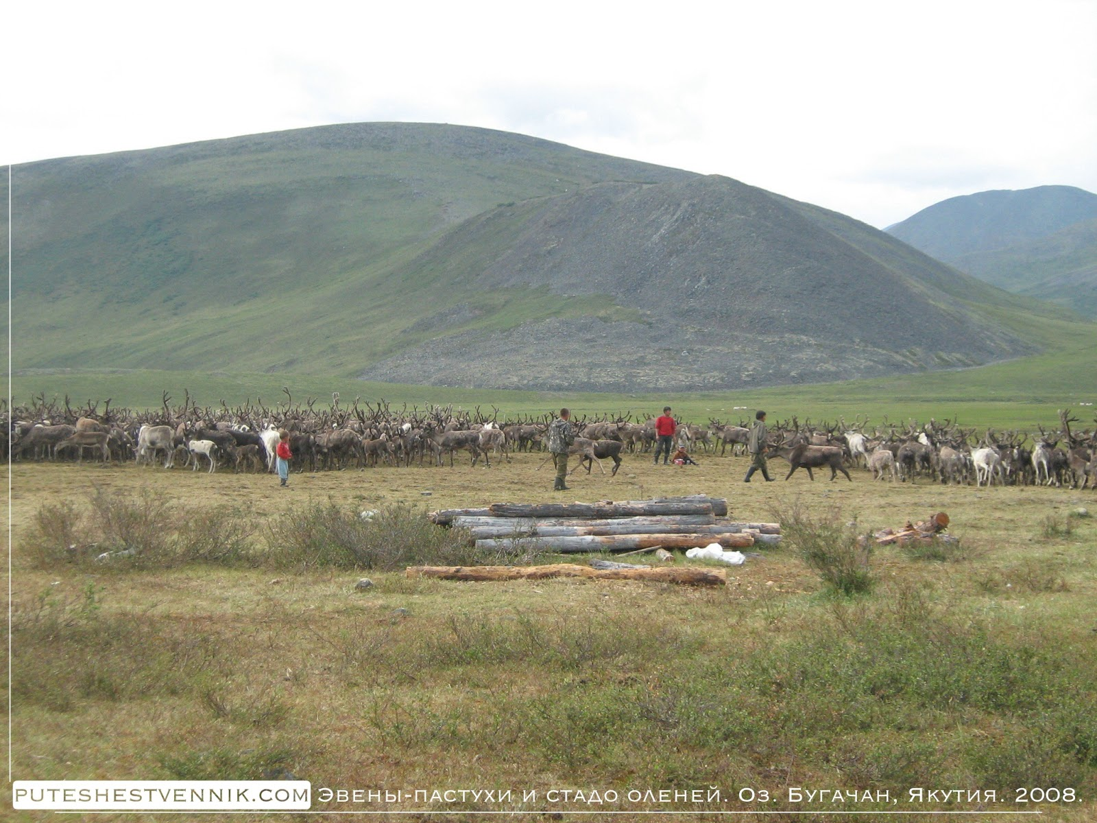 Пастухи и стадо оленей