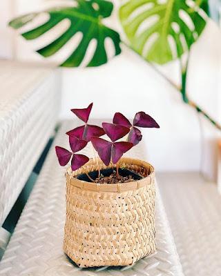Bambusowa plecionka