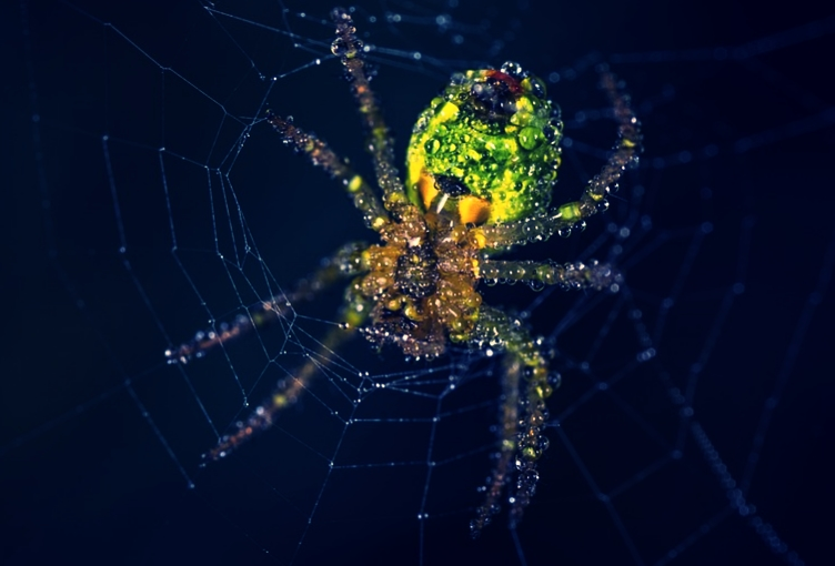 Ciri-ciri laba-laba
