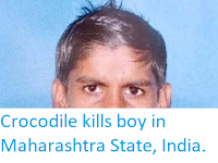 https://sciencythoughts.blogspot.com/2019/05/crocodile-kills-boy-in-maharashtra.html
