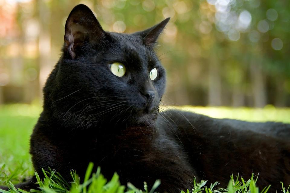 comunicat gato preto sexta feira 13