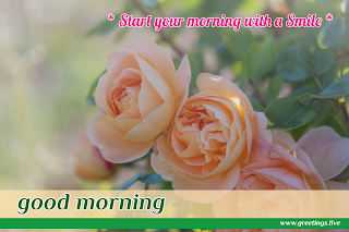 start your morning with smile! Good morning message with rose flowers