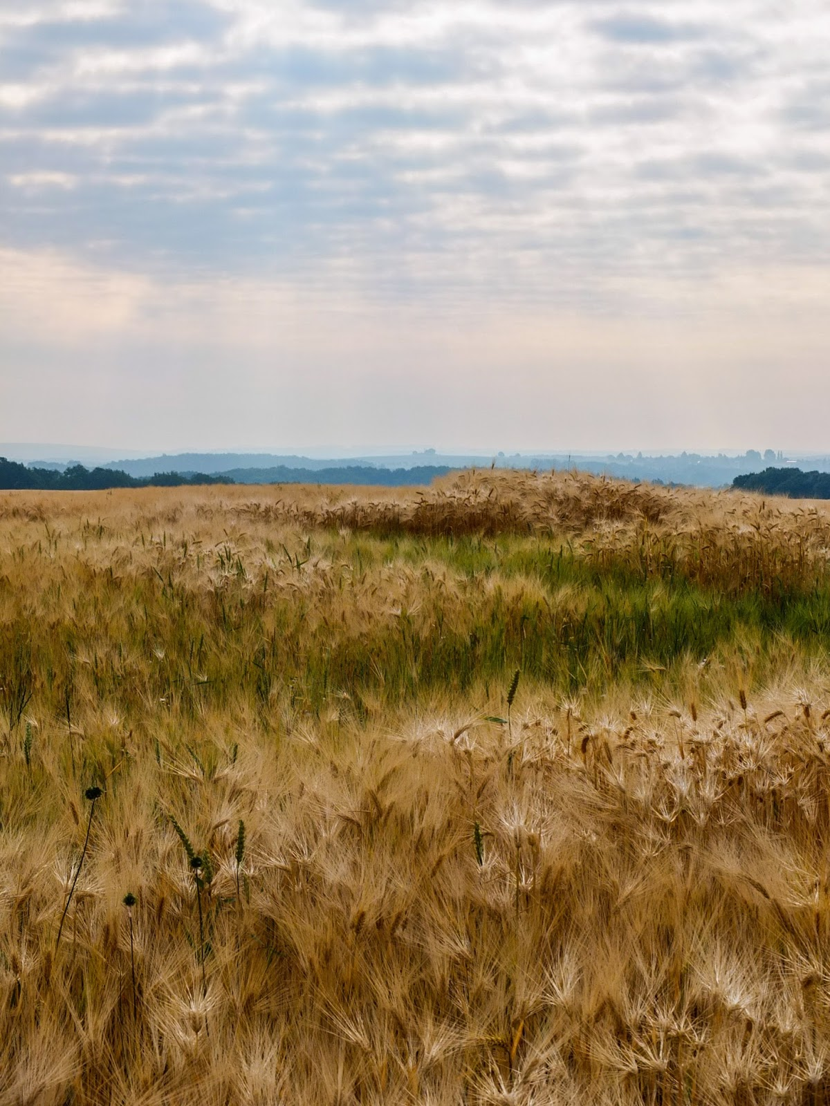 German landscape of golden wheat fields and mountains at sunrise.