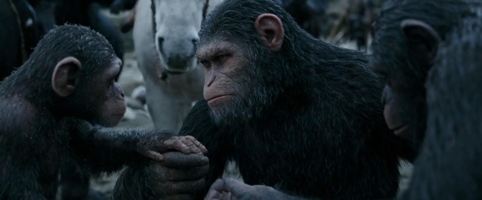 El Planeta de los Simios: La Guerra (2017) 1080p Latino - Ingles captura 2
