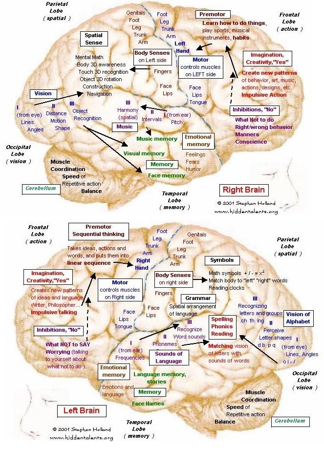 dementia function essay In general, the effects that dementia has on a person's daily life fall into four main categories.