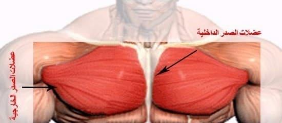 تشريح عَضلة الصَّدر, لكنَّ هذا لا يَمنَع من أن نَقول أنَّ هُناك من يُعاني من ضُعف كَبير في عَضلات الصَّدر (خُصوصاً عَضلات الصَّدر العُلوِيَّة), و غَالِباً ما يَكون السَّبَب وَراء ذَلك هو عَدم مُواكَبة...