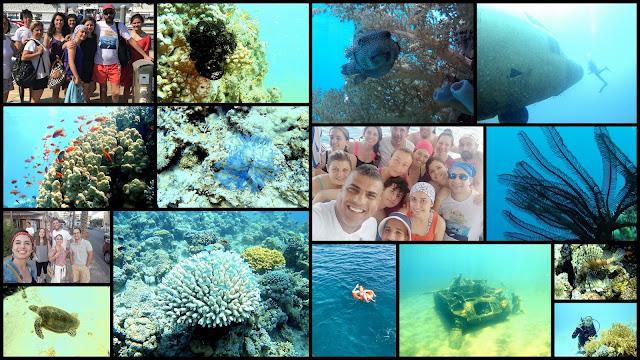 Akabe'de Tüplü Dalış, Akabe, Ürdün, tüplü dalış, scuba diving, Kızıldeniz, vizesiz tatil, Aqaba Sharks Bay Divers, anemon, deniz kaplumbağası, batık, dil balığı, taş balığı, lipsoz,