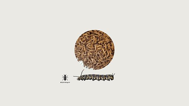 ✅comer-insectos-tendencia-gourmet