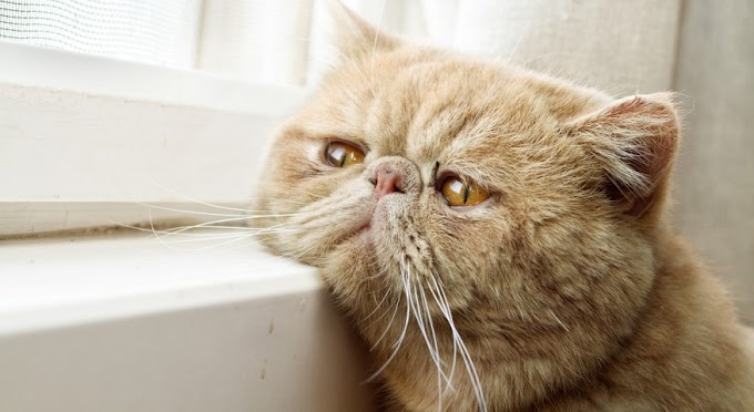 Ways Your Cats Telling You They're Unhappy