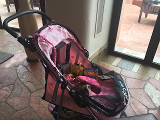 Coco, the Cornish Rex, in her Pink Catillac at the Sheraton Wild Horse Pass Resort