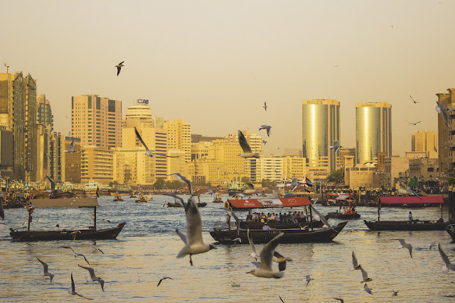 The image is of the Dubai Creek. There are lots of boats on the creek and sea gull flying around. In the background, there are golden skyrise buildings.