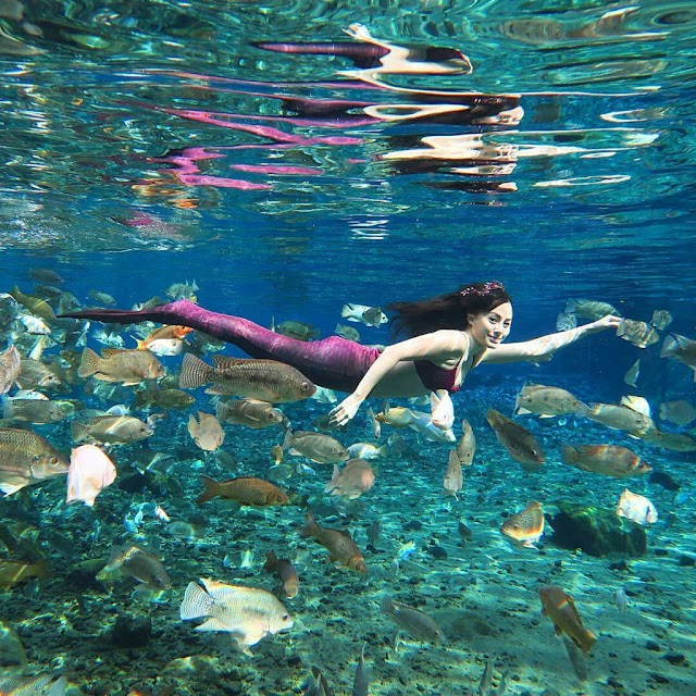 Turning polluted ponds into a social networking star in Indonesia
