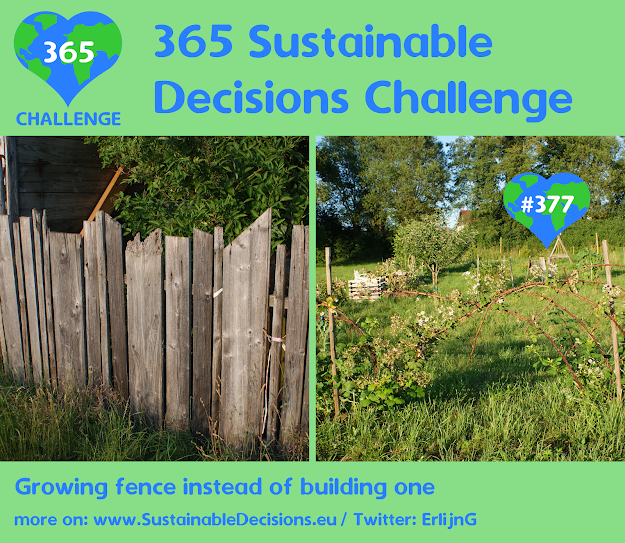 Growing fence instead of building one, sustainable living, sustainability, climate action