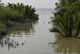 Small canal merged into the river in Sundarban