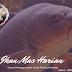 Cara Meracik Umpan Ikan Mas Harian Tanpa Kroto Paling Mantap!