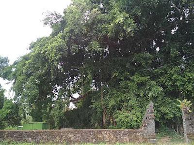 detil pohon menyebabkan langit overexposure