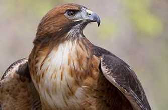 Inilah Burung Paling Berbahaya di Dunia