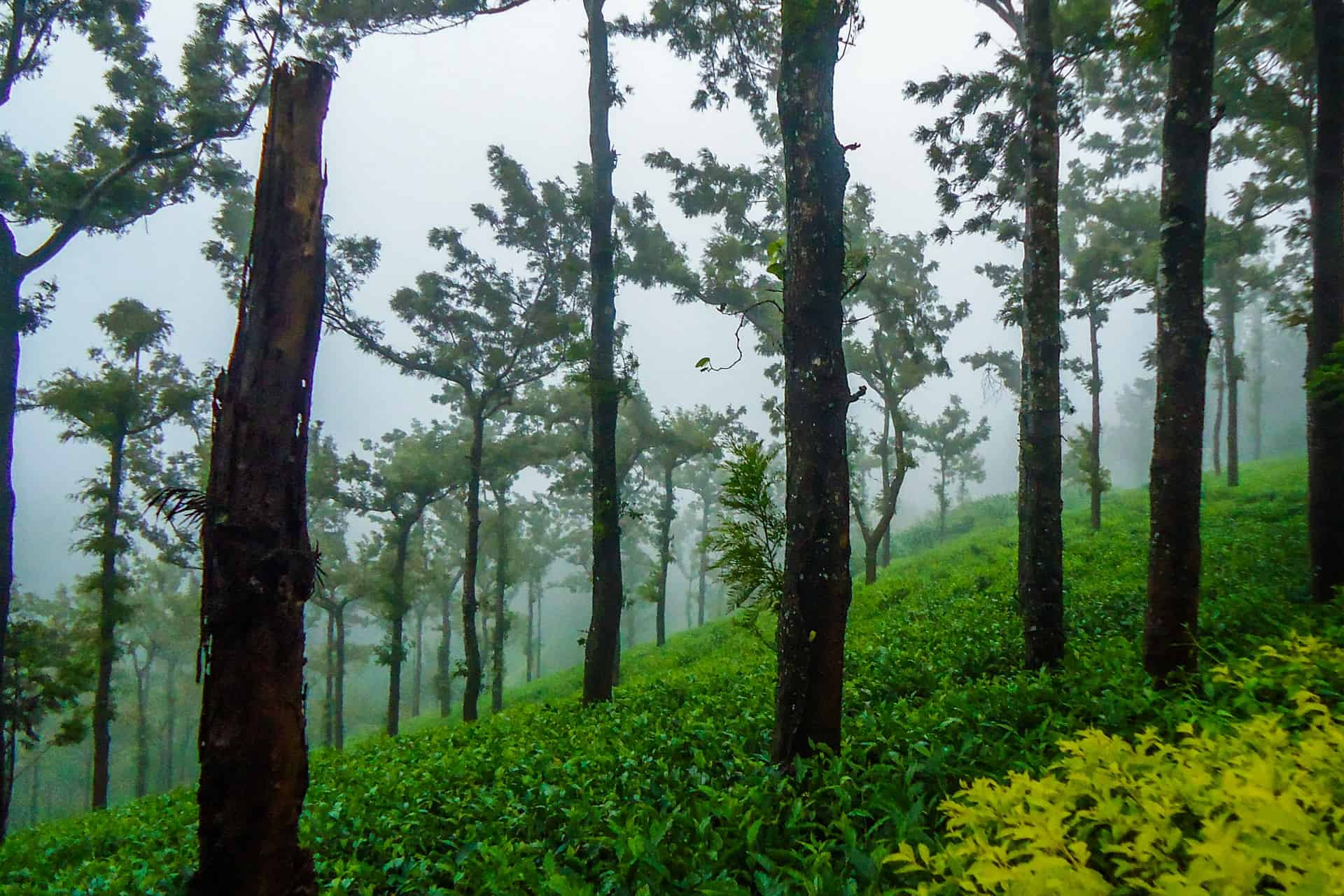 importance-of-ecotourism-in-india