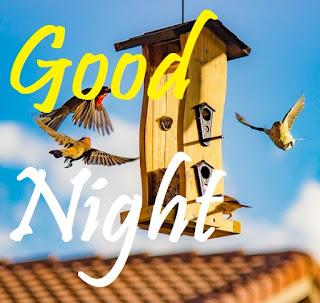 good night birds wallpaper