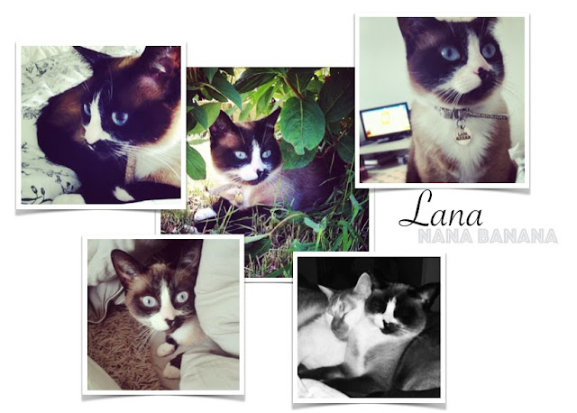 Lana partir avec son chat au canada