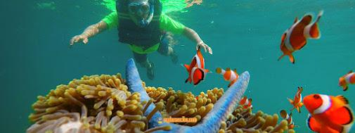 snorkeling underwater pahawang di taman nemo